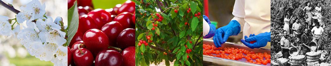 Lazayaラサヤフルーツ
